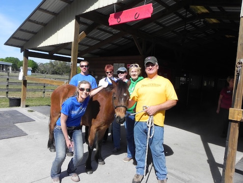 Volunteers with a Horse